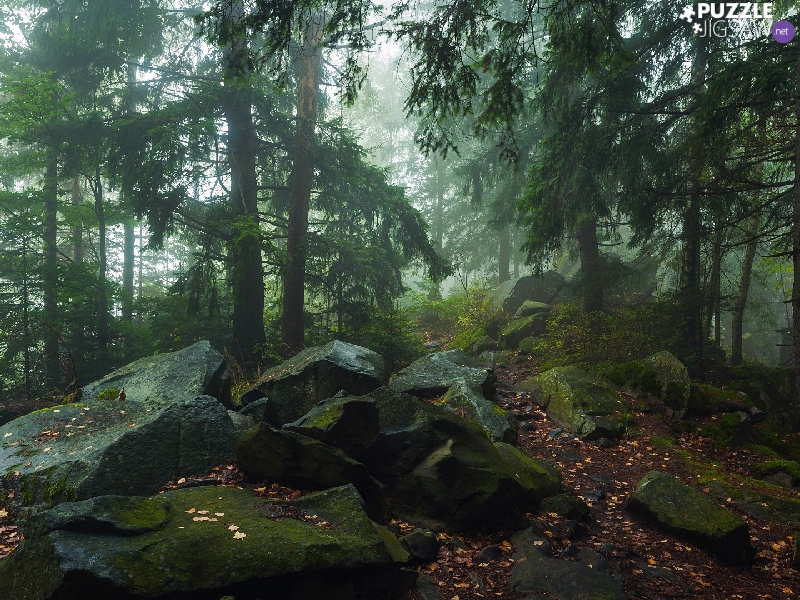 forest, mossy, Stones, Conifers