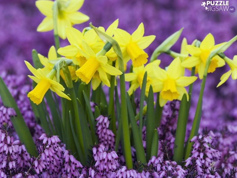 К чему снятся весенние цветы