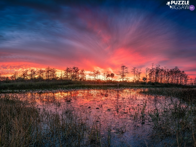 trees, viewes, Red, reflection, Sky, pool, swamp, Great Sunsets, grass