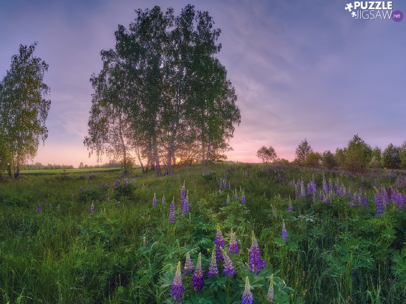 Violet, Green, trees, grass, Meadow, lupine, viewes