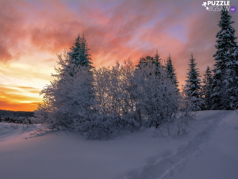 Bush, winter, viewes, Great Sunsets, trees, Snowy
