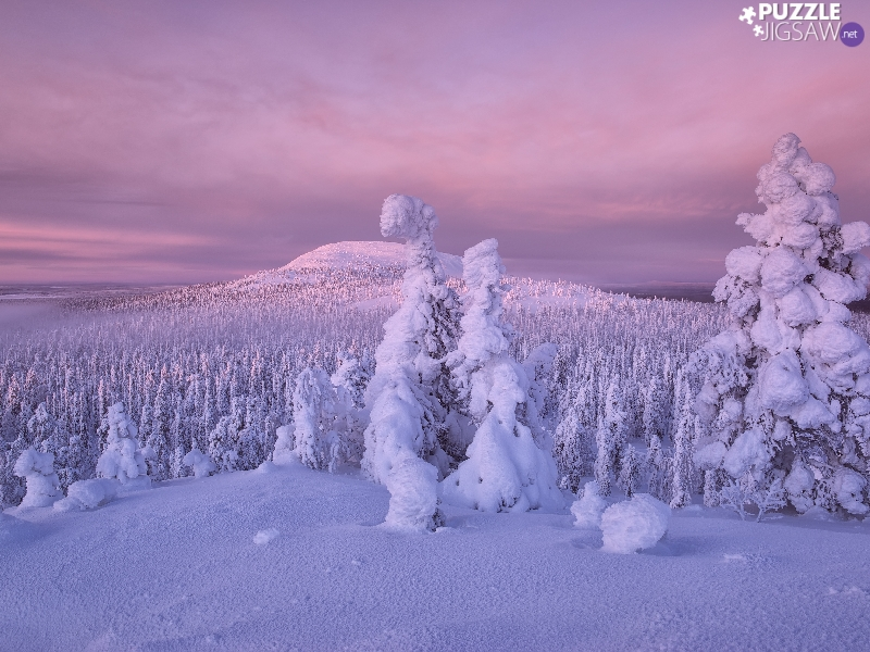 trees, winter, The Hills, Finland, viewes, snowy
