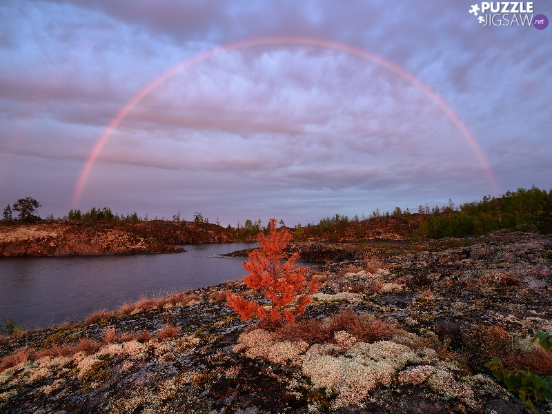 Great Rainbows, Russia, viewes, grass, trees, Lake Ladoga