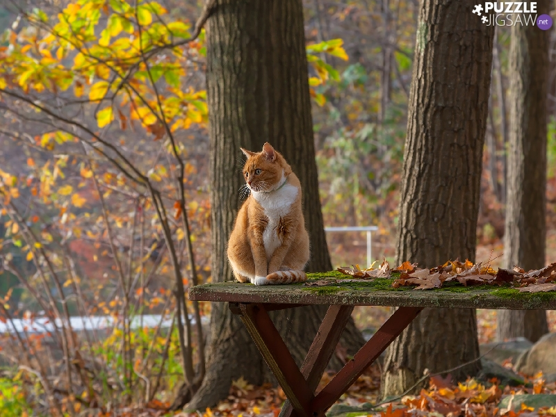 trees, ginger, Table, Leaf, viewes, cat