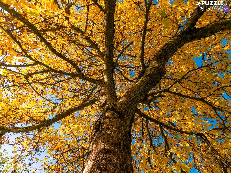 Yellow, Leaf, trees, trunk, Autumn