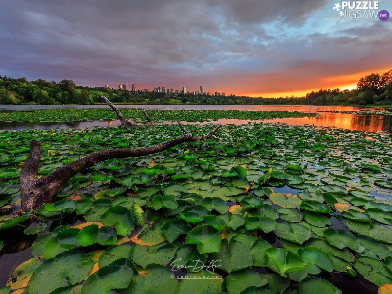 Lod on the beach, Great Sunsets, Leaf, Water lilies, Pond - car