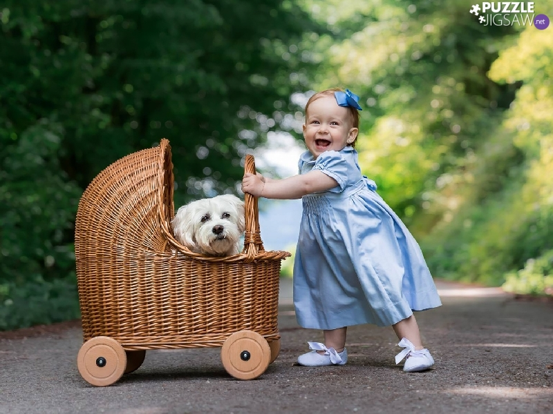 dress, girl, dog, Maltese, trolley, Blue
