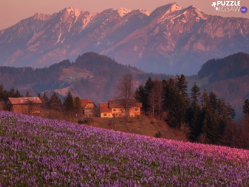 crocuses, Hill, Houses, Meadow, Mountains, Spring, Slovenia