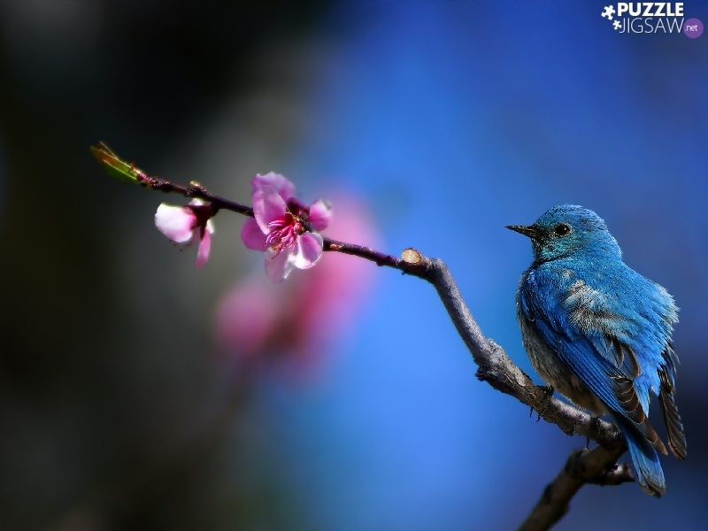 Pink, Flower, Bird, branch, blue