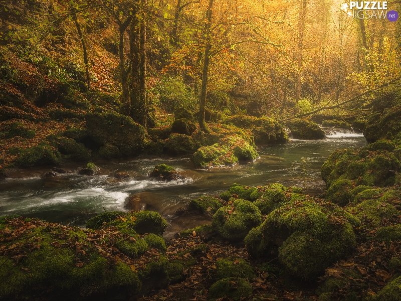 trees, viewes, Stones, Leaf, mossy, forest, autumn, River