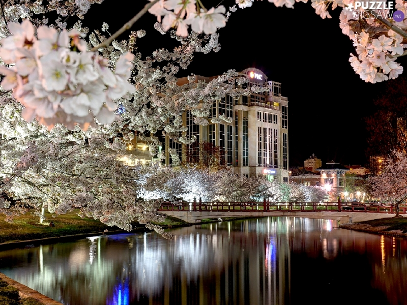 River, Spring, bridge, flourishing, Houses, Night, viewes, House, trees