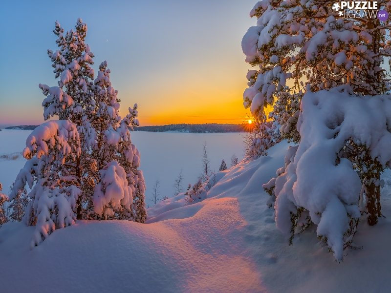 Snowy, winter, viewes, snow, trees, Sunrise