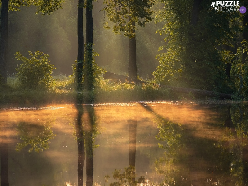 trees, illuminated, forest, sun, River, viewes, reflection