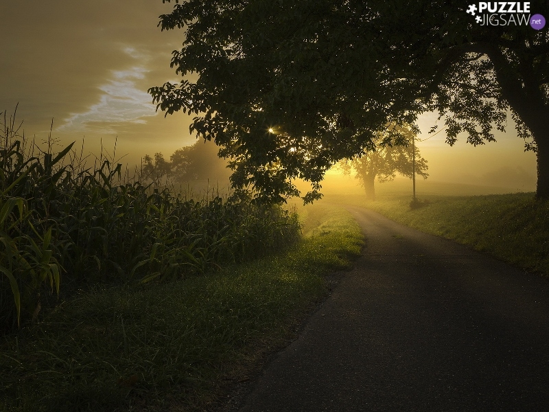 Sunrise, Way, trees, Fog, viewes