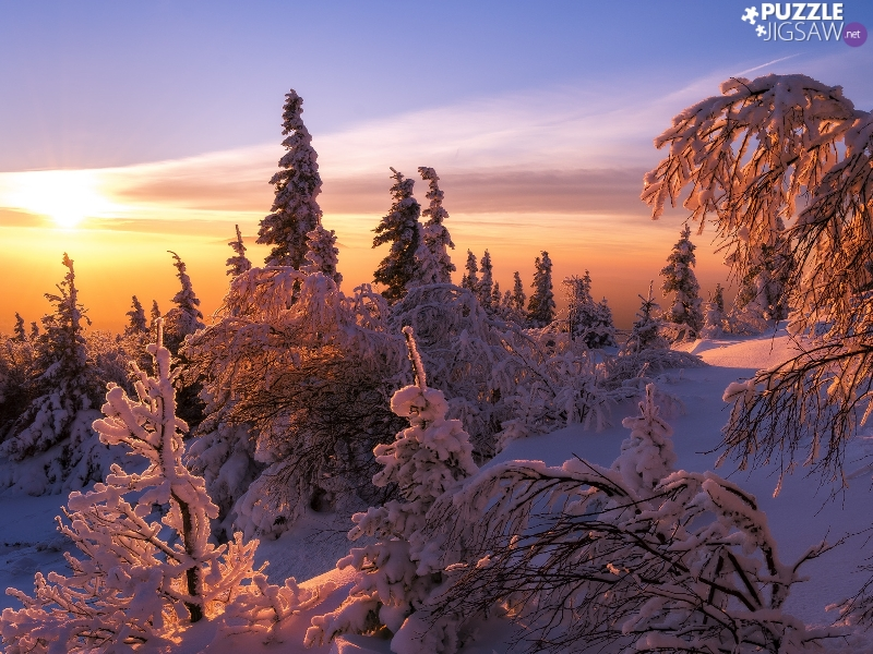 Snowy, winter, viewes, Sunrise, trees, forest