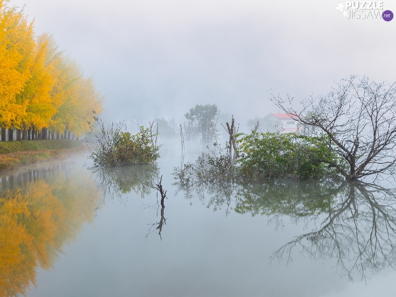 viewes, River, Fog, trees, autumn, Way, Houses
