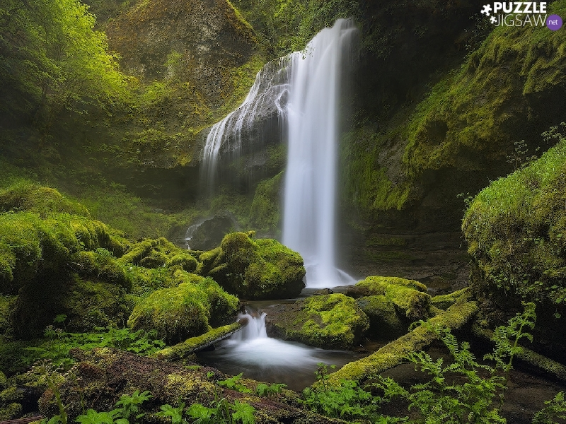 Stones, forest, Stems, rocks, Nature Reserve, The United States, Washington State, mossy, waterfall, Columbia River Gorge, VEGETATION