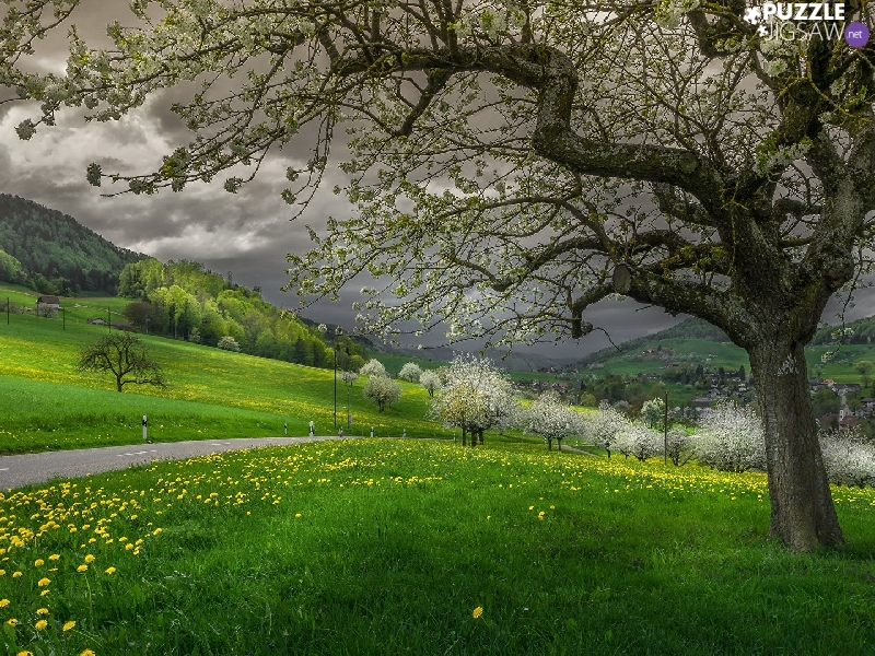 Way, Mountains, dandelion, flourishing, clouds, Spring, viewes, grass, trees