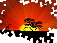 acacia, savanna, west, giraffe, sun