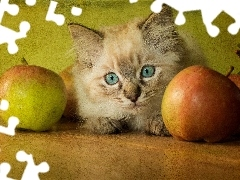 cat, apples