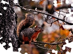 forest, autumn, squirrel
