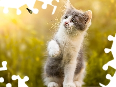 kitten, fuzzy, background, butterfly