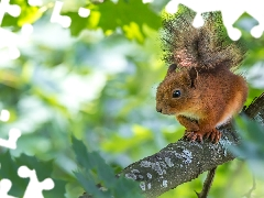 squirrel, fuzzy, background, branch