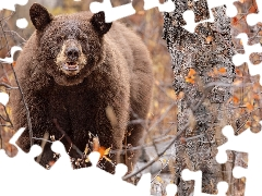 Brown bear, Twigs, leaves, trees