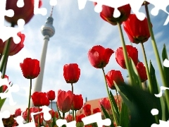 Tulips, Television, Berlin, tower