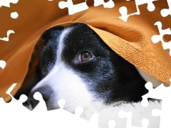 Blanket, Orange, Dog, muzzle