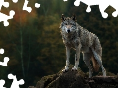 boulders, Wolf, elevation