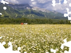 Field, Mountains, British Columbia, Daisies