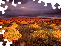 Bush, twilight, canyon, steppe