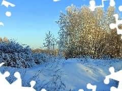 winter, viewes, bushes, trees