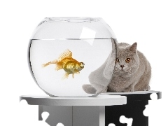 aquarium, Fish, cat, Orb