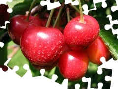 Mature, cherries