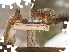squirrels, chess