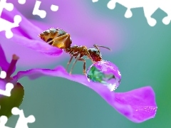 Close, Colourfull Flowers, ant, drop