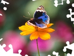 Colourfull Flowers, butterfly
