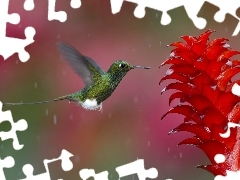 humming-bird, Colourfull Flowers
