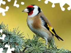conifer, goldfinch, twig