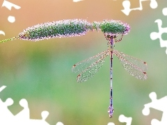 grass, dragon-fly