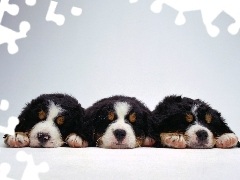 puppies, dream, Three