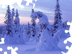 drifts, Frost, coniferous, snow, forest