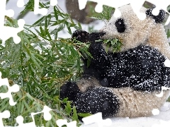 feed, branch, teddy bear, winter, zpabda