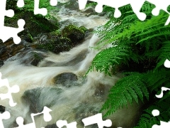 mountainous, Stones, fern, stream