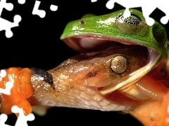 Snake, Fight, strange frog, frog, Green