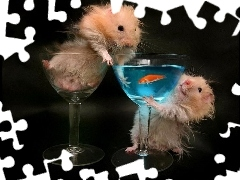 glass, Fish, Hamsters