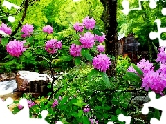 water, forest, flourishing, Rhododendrons, stream, Windmill