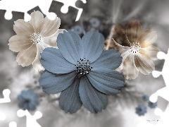 Flowers, Cosmos, 3D Graphics